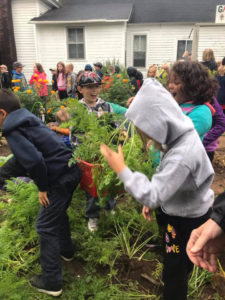 Children pull carrots during Tomahawk's Farm to Table event