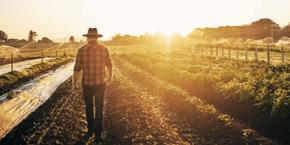 Farmer walking